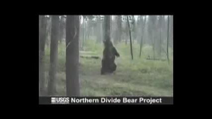 Танцуваща мечка