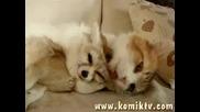 Любов,  любов сварен картоф разрежеш го,  а той суров!любовта между лисица и котка !