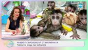 Човекът е произлязъл от маймуната: Човекът се връща към маймуната - На кафе (21.04.2021)
