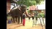 Слон рисува картини в Тайланд