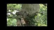 Най - смешния във Vbox7 !!! - Туристи нападнати от група маймуни !