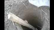 Руснаци спасяват мишка паднала в дупка