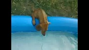 Страхливото ми куче Бети плува