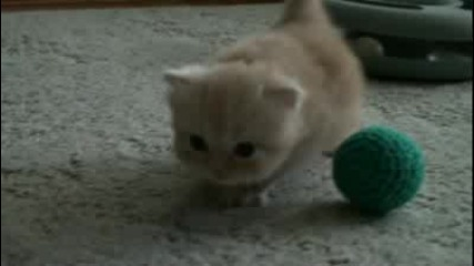 Kitten on the go
