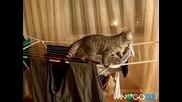 Коте клептоман ( смях )