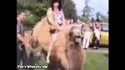 плюеща камила