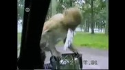 Когато си тъжен , погледни това видео .. смях