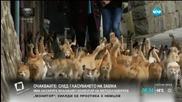Японски остров беше превзет от… котки