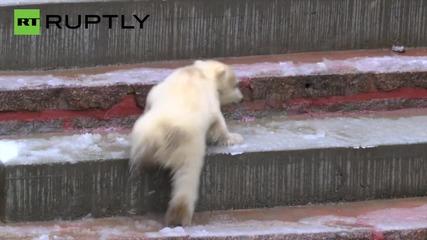 Adorable Polar Bear Cub 'Fiete' Greets the World