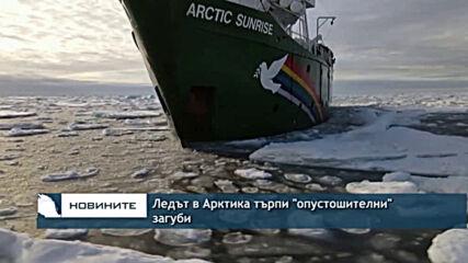 """Ледът в Арктика търпи """"опустошителни"""" загуби"""