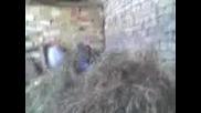 Селско Джъмпане