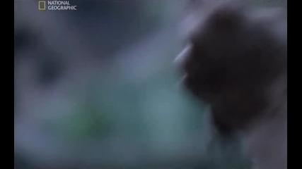 Тайнствените досиета-робин Худ