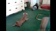 Куче имитира детенце