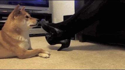 Куче имитатор