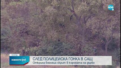 СЛЕД ГОНКА: Откриха беглец в короната на дърво