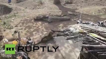 Индия: Мъж отблъсква леопард с тояга
