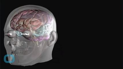 Scientists One Step Closer to a Bionic Brain