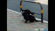 Котешка свада преминва в бой (кунг фу котки )