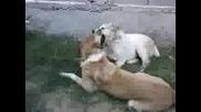Bagira & Arif Си Играят