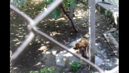Куче си прави басейн 2011