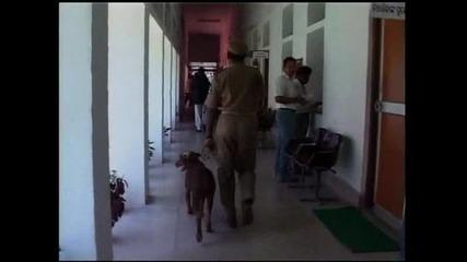 Змия влезе в сградата на парламента на щат в Индия