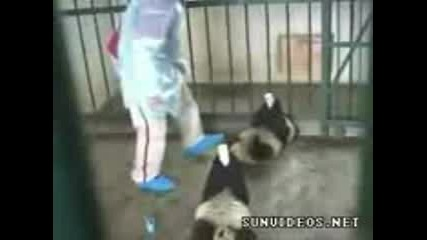 Bebeta Pandi