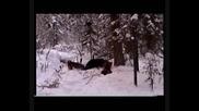 лов на мечки 2