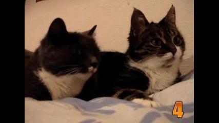 10 Смешни Момента С Котки