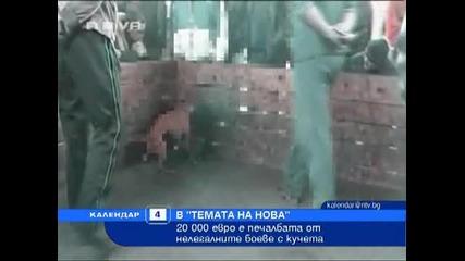 20000 евро печалба в боевете с кучета