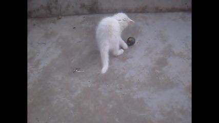 Какво правят моите котки през деня!