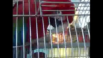 Papagal vijda prizrak