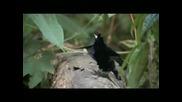 Най - готината птица на планетата