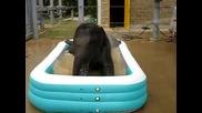 Малки слончета се къпят в басейн