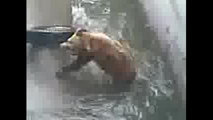 мечка спасител