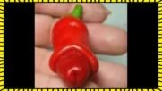 45 странни и забавни плодове и зеленчуци които няма как да не ви разсмеят
