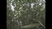 В Бамбуковата Горичка - 1