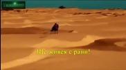 • Aрабско• Нанси Ажрам - Ако Това е Любов Горко Ми / Nancy - Inta Eyh