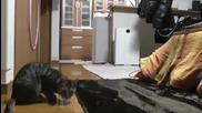 Коте с вратарски умения-смях
