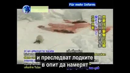 Студената истина на беззащитни тюлени