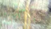 Katletmisler Malesef Butun Ormanlari 2017 Hd