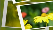 Частичка от слънчевите лъчи...(music Richard Clayderman - Nicolas de Angelis)... ...