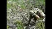 Повален елен осира ловец