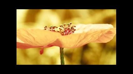 Невероятната природа на Земята!