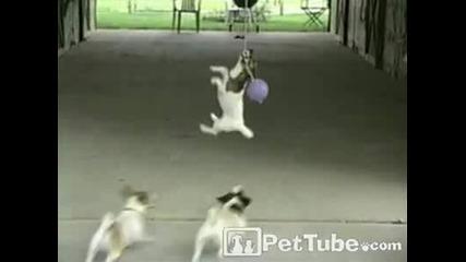 Кучета си играят