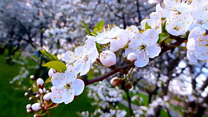 Събудете се и се усмихнете - Пролетта е тук!