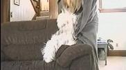 Наелектризирано куче! Адски смях :d:d:d