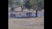 Още слонове :) еленчета ,сърнички и други