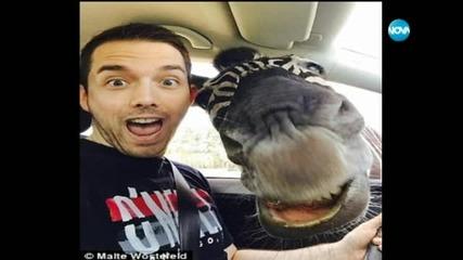 Най-любопитното селфи - със зебра