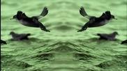 Minimal Techno™ + video // Hugo Paixao- Rat Man ( Original Mix)