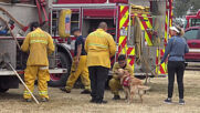 USA: Therapy dog Kerith provides support to firefighters battling California wildfires